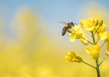 Wirksame Tipps und Tricks gegen Bienen und Wespen im Sommer