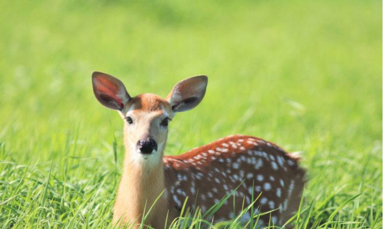 Was ist die Bambi-Lüge