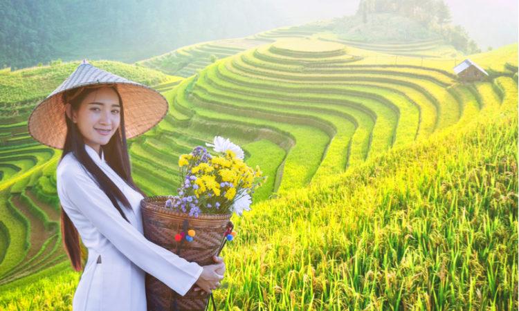 junge, asiatische Frau, die in den grünen Reisfeldern Vietnams steht und einen Bambuskorb hält