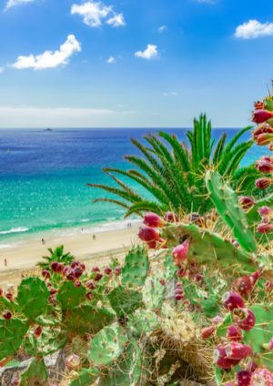 Esquinzo STrand mit Kakteen und türkisfarbenenm Meer auf der Kanarischen Insel Fuerteventura